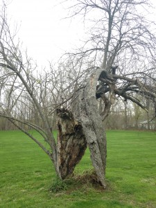 Strange tree sightings!