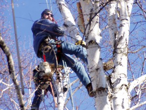 Tree trimming and removal services in Ann Arbor area